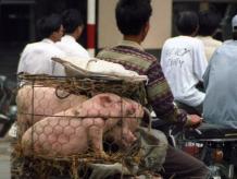 hanoi vietnam.jpg