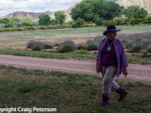 Lavender farmer